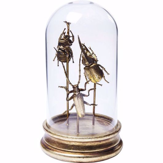 Picture of Insects Tre