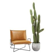 图片 Cactus Pot Deco Plant 202